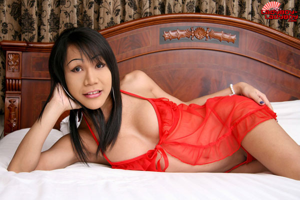 t tuk lblb Lovely Spring Roses This Week At Ladyboy Ladyboy!